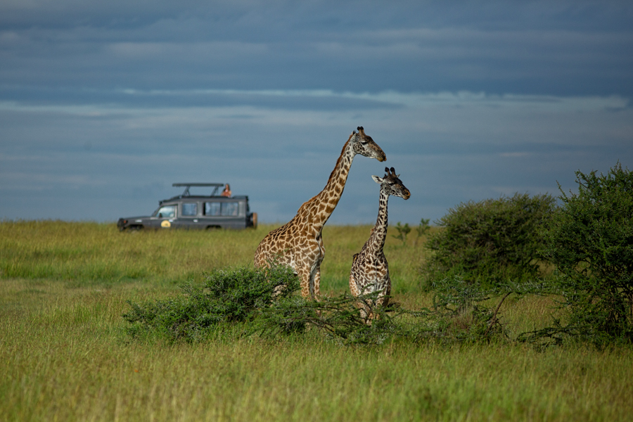 safari-game-drive-africa-east-camps